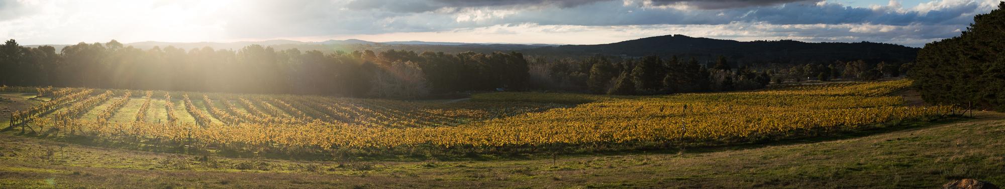 lark-hill-vineyard (002)